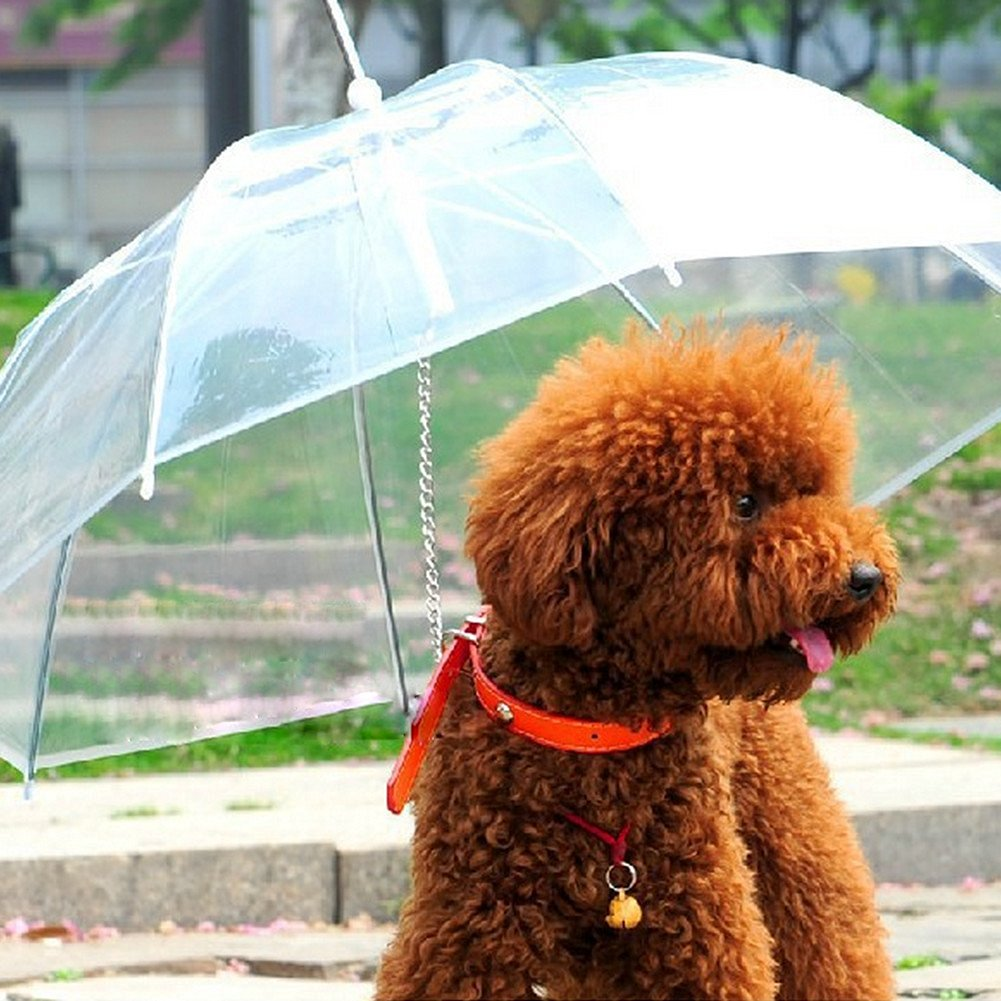 <center>Korean Dog Umbrella</center>